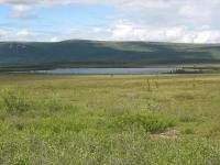Alaska Shrub Tundra