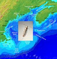 A Planktonic Copepod Crustacean