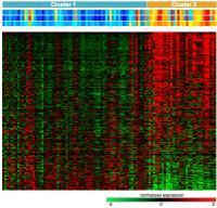 Expression of DE Genes