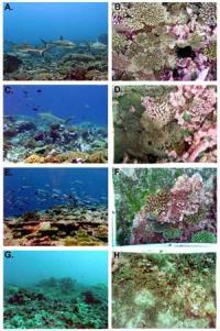 Line Islands Coral Reef