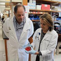 Phillip I. Tarr and Barbara B. Warner, Washington University School of Medicine