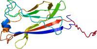 SPOP (Speckle-type POZ Protein)