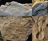 Deep-Water Ediacaran Fossils
