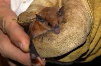 Bat (1 of 2)