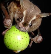 Bat (2 of 2)