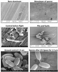 <I>Bacillus</I>