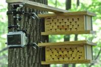 Bee Monitoring Camera