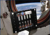 BCAT-5 Sample