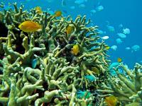 Scott Reef, WA, Australia