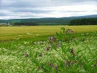 Plantinga Ecosystem