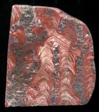Ferruginous Stromatolites