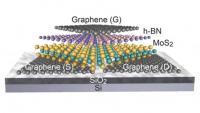 2-D Field-Effect Transistor