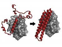 BINDI Protein