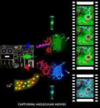 Molecular Movies