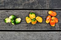 Fruit Signaling