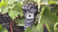ACS Wine Symposium