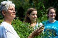 WPI Artemisia Annual Harvest