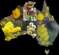 Phylogenetic Diveristy Among Australian Acacias