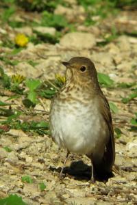 Songbird (3 of 3)