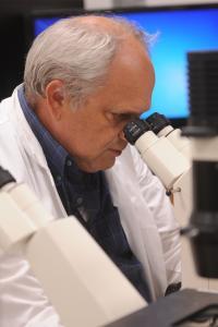 Andrew Mount, Clemson University