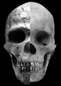 Cieri Skull Mashup