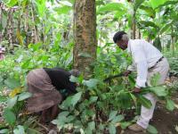 V. Africana Plant