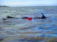 Snorkeling in Fiji to Study Marine Habitats