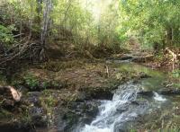 Ankarafa Forest
