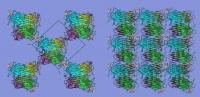 Protein Concanavalin A