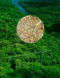 Research Canopy Crane, Parque Natural San Lorenzo