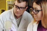 Evolving Antibodies