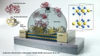 Molybdenium Disulfide FET-Based Biosensor