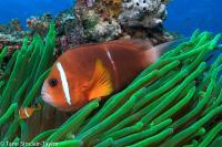Clownfish Travel