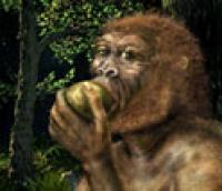 Ancient Nutcracker Man