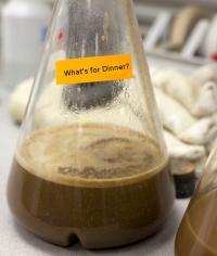 Bacterial Slime