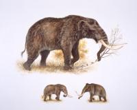 Mastodon vs Mammoth