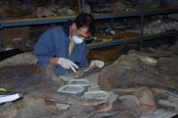 Sampling Mastodon Bones