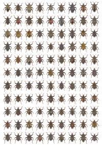 98 New Species of <I>Trigonopterus</I>