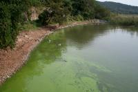 Cyanobacterial Bloom