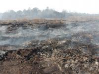 Smoldering Peatland Fire