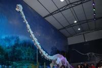 Long-Necked Dinosaur