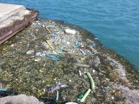 Debris at Edge of Lake Michigan