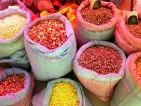 Maize Landraces