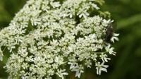 Poison Plants Revolutionize Medicine