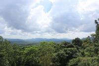Rainforest near Site of Batadomba-lena