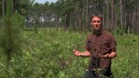 World's Forests at Risk for Habitat Destruction (2 of 9)