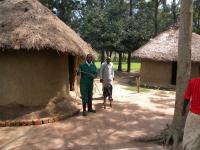 Calf in Kenya