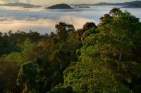 Borneo Rainforest (1 of 2)