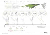 <I>Brontosaurus</I> Infographic