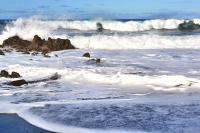 Algae and Bacteria in the Ocean